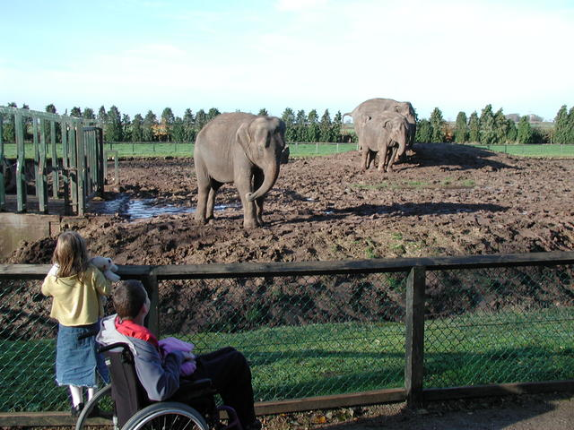 Watching the elephants - Twycross 19/11/2006